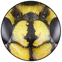 Yellow Jackets Pest Control